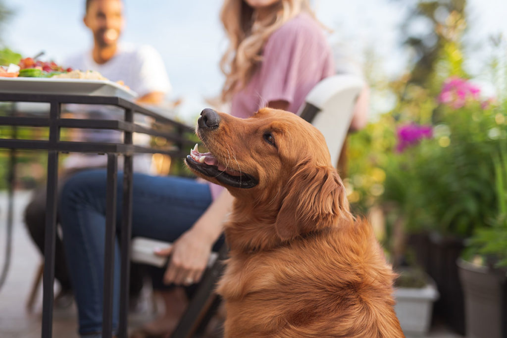 Dog on a patio by people eating outdoors